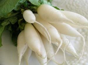 whiteradish1
